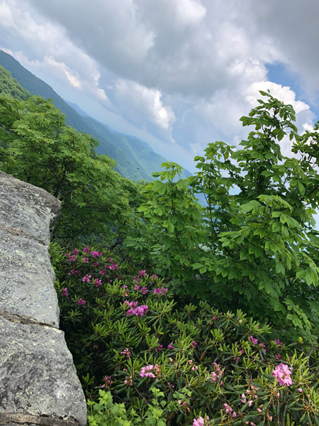 Craggy Gardens Visitor Center views with purple Catawba rhododendrons and Blue Ridge Mountains with rock ledge