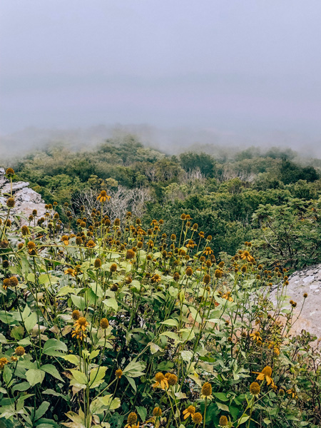 Craggy Pinnacle Hike Spring fog over trail with green grass and yellow wildflowers along BRP near Asheville, North Carolina