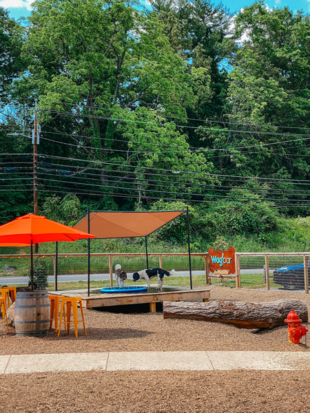 Wagbar Dog Park Bar Weaverville NC with dogs playing in a fountain
