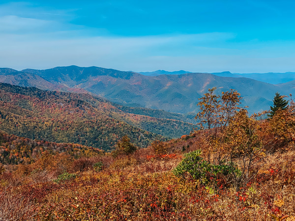 Black Balsam Via Art Loeb Trail Blue Ridge Parkway with Blue Ridge Mountains during fall foliage with reds, greens, and oranges
