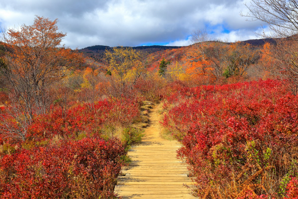 Graveyard Fields Blue Ridge Parkway NC with hiking trail surrounded by red and orange fall foliage