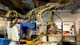 Museums Asheville NC with dinosaur skeleton from Asheville Museum of Science