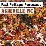 Asheville Fall Festivals Foliage Color Forecast Pinterest Pin with with red, yellow and orange leaves on ground with dusting of snow