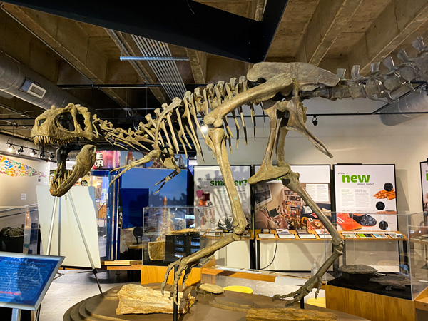 Asheville Museum of Science For Kids with dinosaur bones surrounded by exhibits